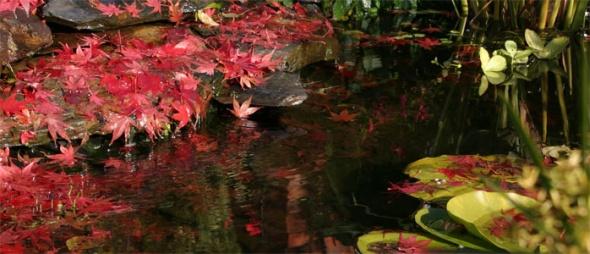 """Képtalálat a következőre: """"kerti tó ősszel"""""""